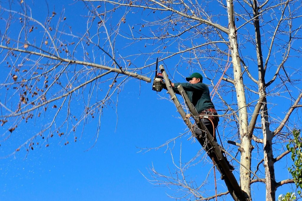 Contact Us-Palmetto Bay FL Tree Trimming and Stump Grinding Services-We Offer Tree Trimming Services, Tree Removal, Tree Pruning, Tree Cutting, Residential and Commercial Tree Trimming Services, Storm Damage, Emergency Tree Removal, Land Clearing, Tree Companies, Tree Care Service, Stump Grinding, and we're the Best Tree Trimming Company Near You Guaranteed!
