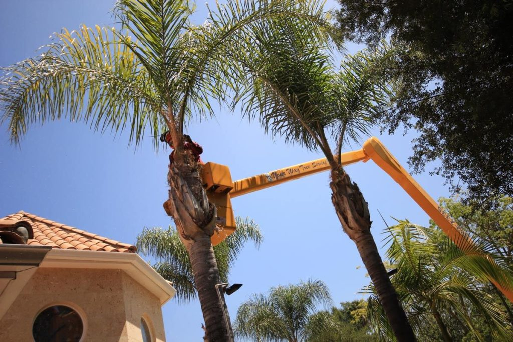 Palm Tree Trimming-Palmetto Bay FL Tree Trimming and Stump Grinding Services-We Offer Tree Trimming Services, Tree Removal, Tree Pruning, Tree Cutting, Residential and Commercial Tree Trimming Services, Storm Damage, Emergency Tree Removal, Land Clearing, Tree Companies, Tree Care Service, Stump Grinding, and we're the Best Tree Trimming Company Near You Guaranteed!