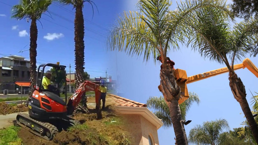 Palm tree trimming & palm tree removal-Palmetto Bay FL Tree Trimming and Stump Grinding Services-We Offer Tree Trimming Services, Tree Removal, Tree Pruning, Tree Cutting, Residential and Commercial Tree Trimming Services, Storm Damage, Emergency Tree Removal, Land Clearing, Tree Companies, Tree Care Service, Stump Grinding, and we're the Best Tree Trimming Company Near You Guaranteed!