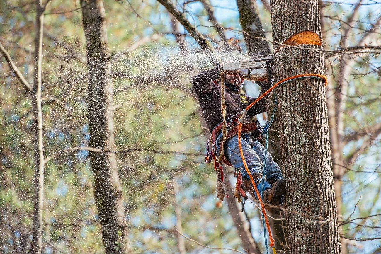 Palmetto Bay FL Tree Trimming and Stump Grinding Services Home Page-We Offer Tree Trimming Services, Tree Removal, Tree Pruning, Tree Cutting, Residential and Commercial Tree Trimming Services, Storm Damage, Emergency Tree Removal, Land Clearing, Tree Companies, Tree Care Service, Stump Grinding, and we're the Best Tree Trimming Company Near You Guaranteed!