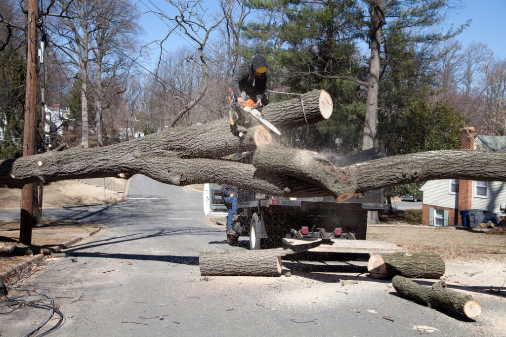 Residential Tree Services-Palmetto Bay FL Tree Trimming and Stump Grinding Services-We Offer Tree Trimming Services, Tree Removal, Tree Pruning, Tree Cutting, Residential and Commercial Tree Trimming Services, Storm Damage, Emergency Tree Removal, Land Clearing, Tree Companies, Tree Care Service, Stump Grinding, and we're the Best Tree Trimming Company Near You Guaranteed!