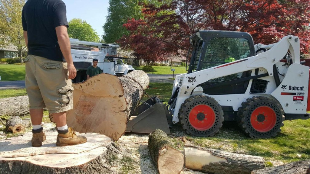 Services-Palmetto Bay FL Tree Trimming and Stump Grinding Services-We Offer Tree Trimming Services, Tree Removal, Tree Pruning, Tree Cutting, Residential and Commercial Tree Trimming Services, Storm Damage, Emergency Tree Removal, Land Clearing, Tree Companies, Tree Care Service, Stump Grinding, and we're the Best Tree Trimming Company Near You Guaranteed!