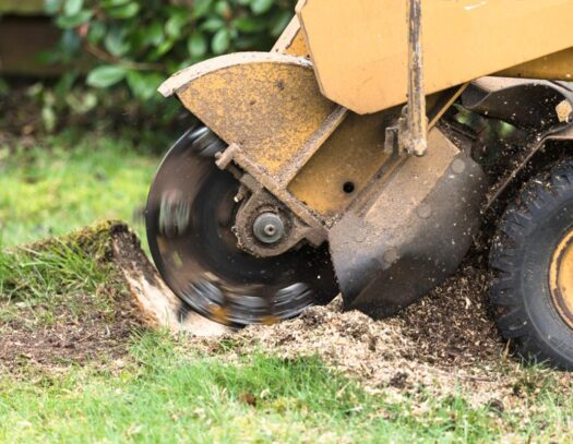 Stump Grinding-Palmetto Bay FL Tree Trimming and Stump Grinding Services-We Offer Tree Trimming Services, Tree Removal, Tree Pruning, Tree Cutting, Residential and Commercial Tree Trimming Services, Storm Damage, Emergency Tree Removal, Land Clearing, Tree Companies, Tree Care Service, Stump Grinding, and we're the Best Tree Trimming Company Near You Guaranteed!