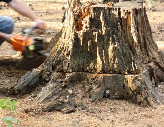 Stump Removal-Palmetto Bay FL Tree Trimming and Stump Grinding Services-We Offer Tree Trimming Services, Tree Removal, Tree Pruning, Tree Cutting, Residential and Commercial Tree Trimming Services, Storm Damage, Emergency Tree Removal, Land Clearing, Tree Companies, Tree Care Service, Stump Grinding, and we're the Best Tree Trimming Company Near You Guaranteed!