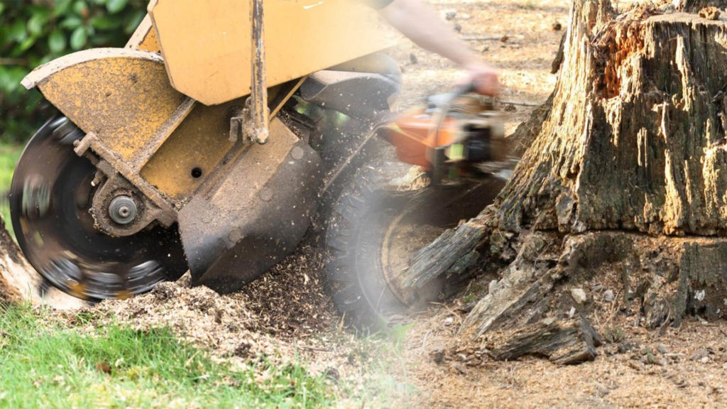 Stump grinding & removal-Palmetto Bay FL Tree Trimming and Stump Grinding Services-We Offer Tree Trimming Services, Tree Removal, Tree Pruning, Tree Cutting, Residential and Commercial Tree Trimming Services, Storm Damage, Emergency Tree Removal, Land Clearing, Tree Companies, Tree Care Service, Stump Grinding, and we're the Best Tree Trimming Company Near You Guaranteed!
