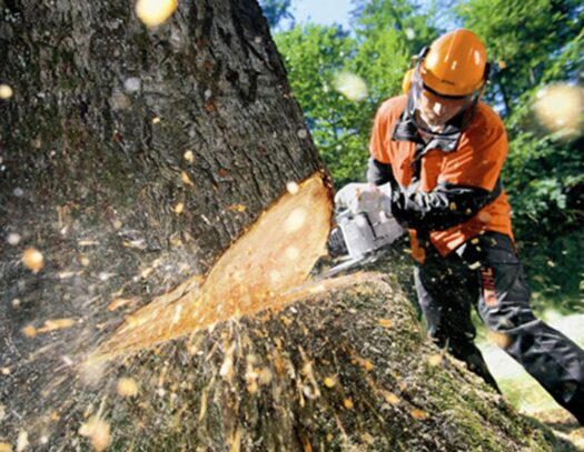 Tree Cutting-Palmetto Bay FL Tree Trimming and Stump Grinding Services-We Offer Tree Trimming Services, Tree Removal, Tree Pruning, Tree Cutting, Residential and Commercial Tree Trimming Services, Storm Damage, Emergency Tree Removal, Land Clearing, Tree Companies, Tree Care Service, Stump Grinding, and we're the Best Tree Trimming Company Near You Guaranteed!