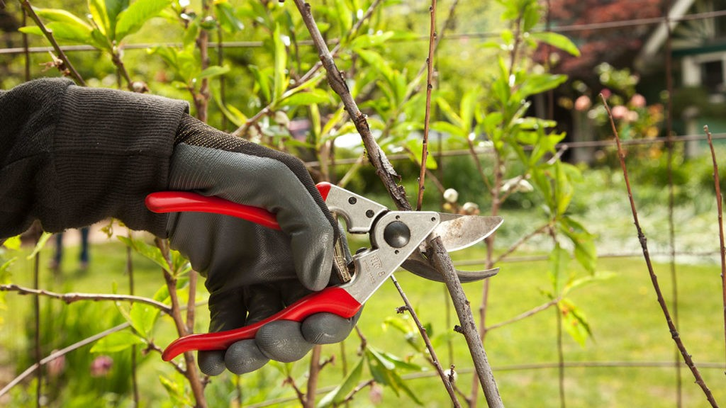 Tree Pruning-Palmetto Bay FL Tree Trimming and Stump Grinding Services-We Offer Tree Trimming Services, Tree Removal, Tree Pruning, Tree Cutting, Residential and Commercial Tree Trimming Services, Storm Damage, Emergency Tree Removal, Land Clearing, Tree Companies, Tree Care Service, Stump Grinding, and we're the Best Tree Trimming Company Near You Guaranteed!