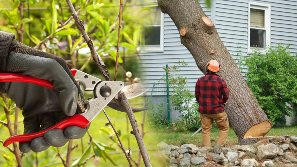Tree pruning & tree removal-Palmetto Bay FL Tree Trimming and Stump Grinding Services-We Offer Tree Trimming Services, Tree Removal, Tree Pruning, Tree Cutting, Residential and Commercial Tree Trimming Services, Storm Damage, Emergency Tree Removal, Land Clearing, Tree Companies, Tree Care Service, Stump Grinding, and we're the Best Tree Trimming Company Near You Guaranteed!
